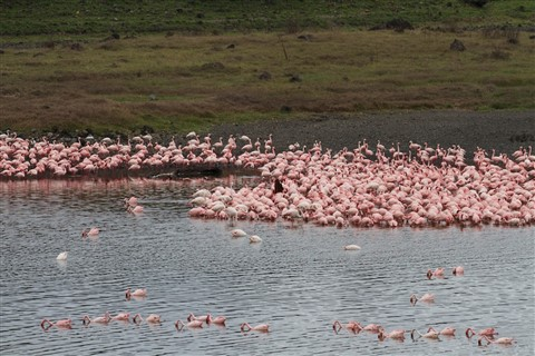 Acres of Flamingos - 1