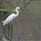 DSC00133 white beak
