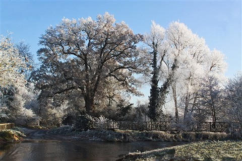 Trees frosty by Coughton ford