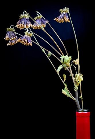 Flower shots-139
