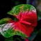 Palmengarten_flower_2