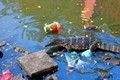Monitor lizard in Lumpini Park