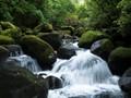 Wairere Falls Walk