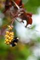 wild wild bee