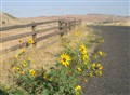 Fence near Thermopolis