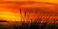 Marram Grass at Sunset