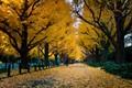 Autumn morning in tokyo