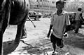 Eleph Mumbai