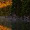 Sherborne Lake sunrise