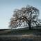 The Oak K-S2-_IMG0062