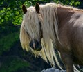 mrs.Horse