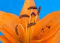 Orange_floral