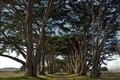 Point Reyes Allee