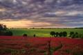 red field2