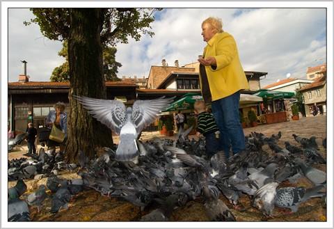 angel from sarajevo