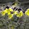 Flowers blurry effect-wj
