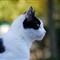 cat_Monstruo_20111007_001