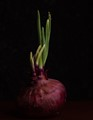 Red Onion Monthly