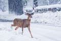 Almost Ran Over Rudolph-9112