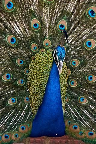 Himalayan Bird Park, Shimla