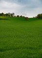 Green Filed