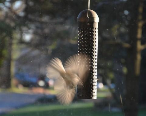 bird flitter_01