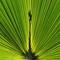 p[alm leaf