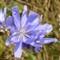 Purple Flowering Weed