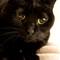 black catt