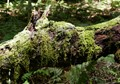 moss on dead wood