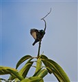 Sunbird at morning