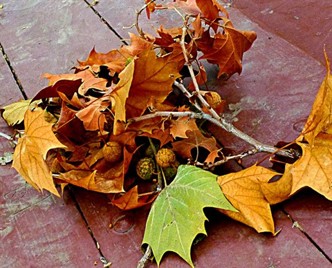 Leaf.Forum