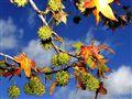 Hazy Shades Of Autumn