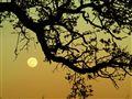 Sunrise & Valley Oak