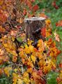 Fall in the Barossa