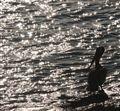Sparkling Pelican Water
