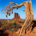 Joe's Tree